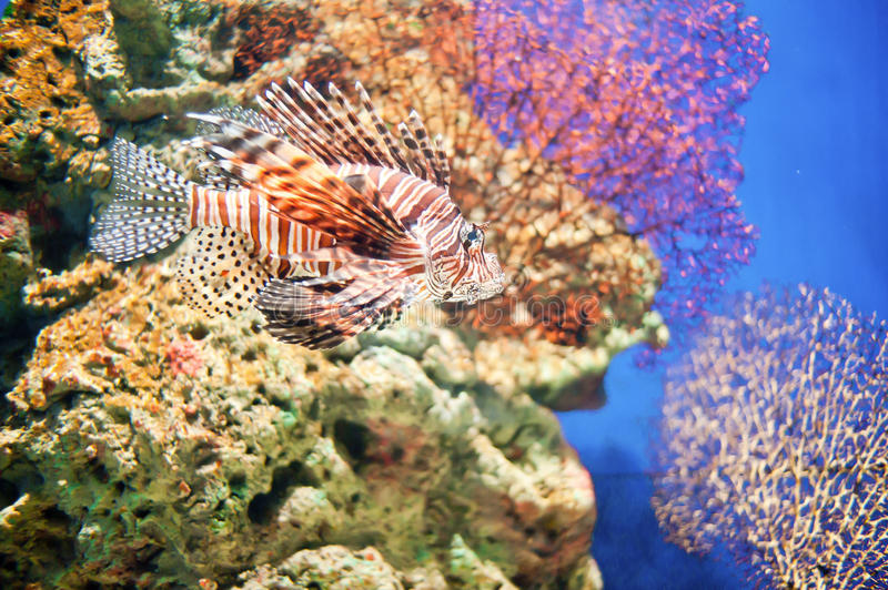 Download Corals and deep-sea fish stock photo. Image of angelfish - 23785702