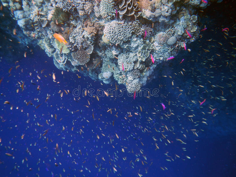 Corals and fishes royalty free stock photos