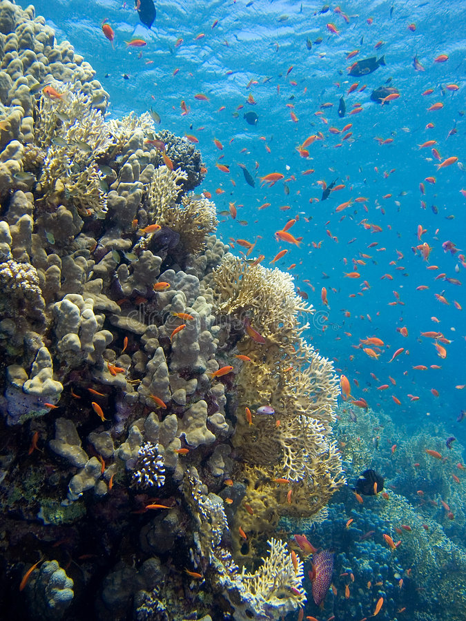 Corals of the Red Sea stock photography