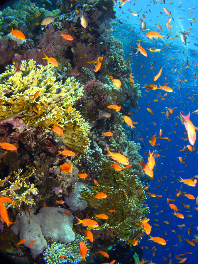 Download Corals Reef stock image. Image of nature, activity, life - 16108379