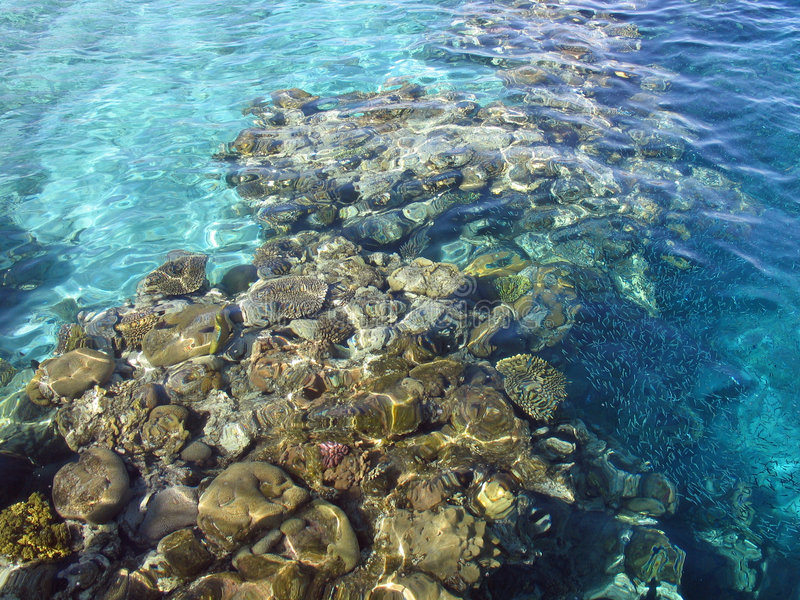 Corals reef in the Red Sea. Corals reefs nature reserve in the Red Sea Eilat Israel stock photography