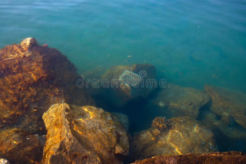 In depth of the Red sea waters stock photos
