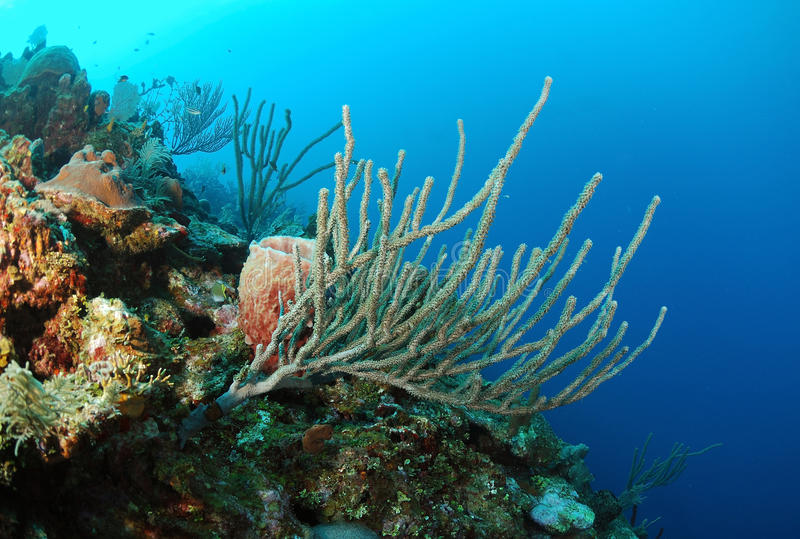 Corals and sea sponges stock images