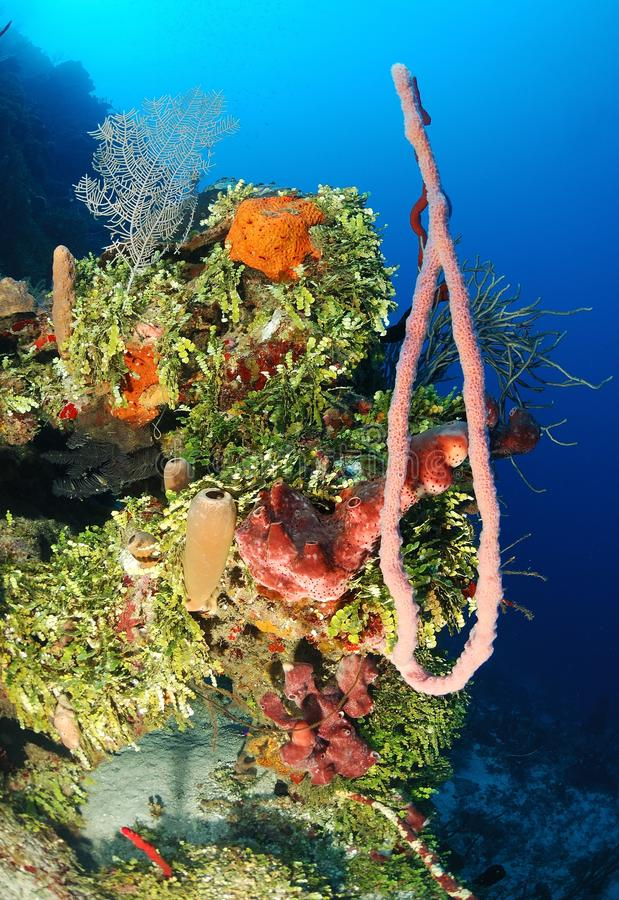 Corals and sponges royalty free stock photography