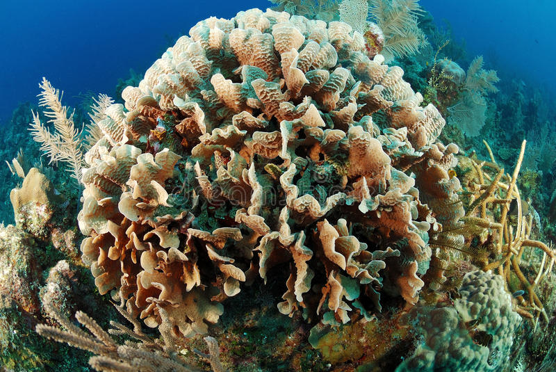 Corals underwater royalty free stock photos