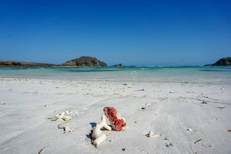 Coraux blancs et rouges sur la plage rose de l'île de Lombok, Indonésie photos stock