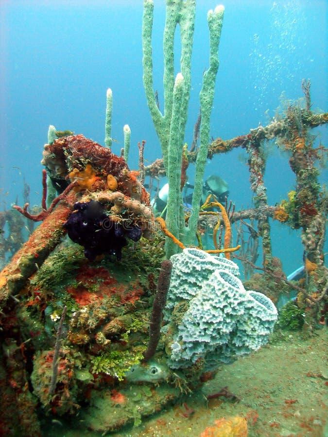 Coraux colorés habitant une épave photographie stock