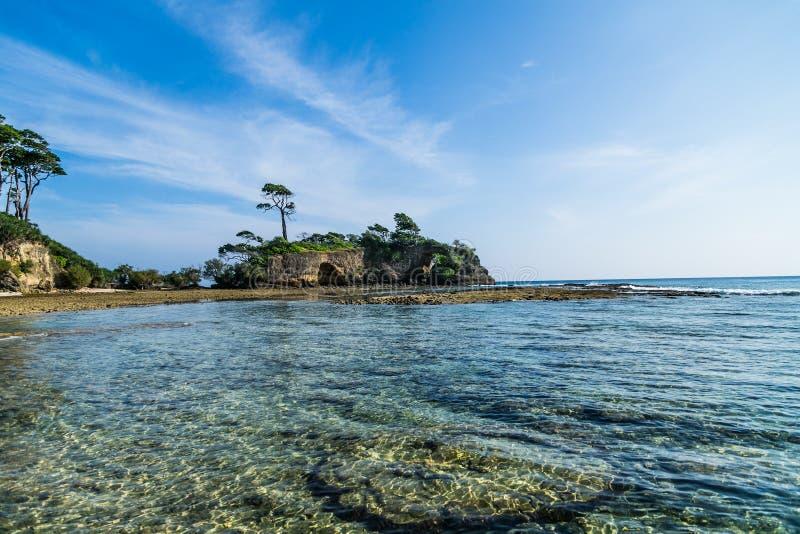 Coraux d'île de Neills photo libre de droits