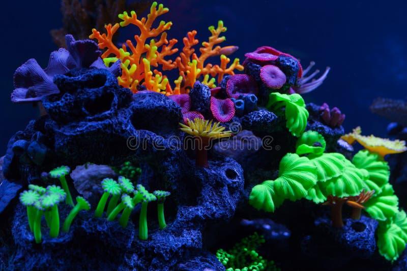 Coraux lumineux sous l'eau images stock
