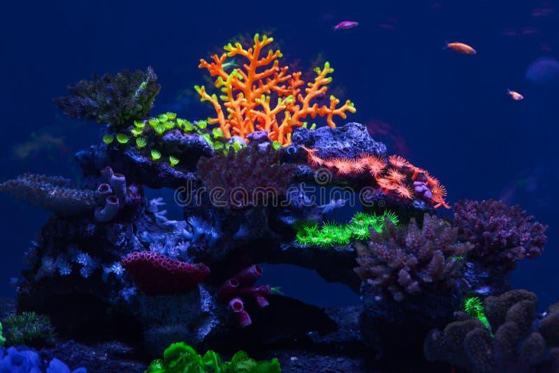 Coraux multicolores sous l'eau photo stock