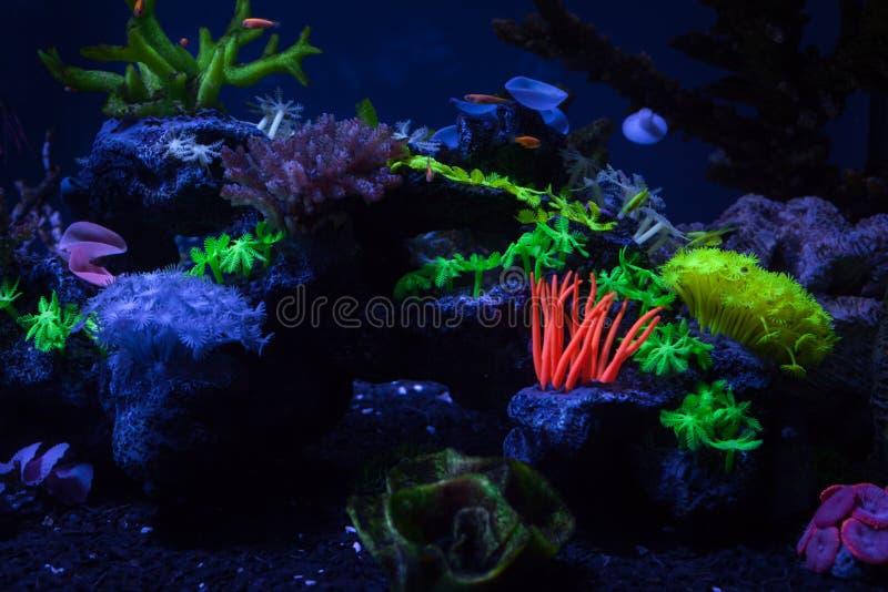 Coraux sous l'eau images libres de droits