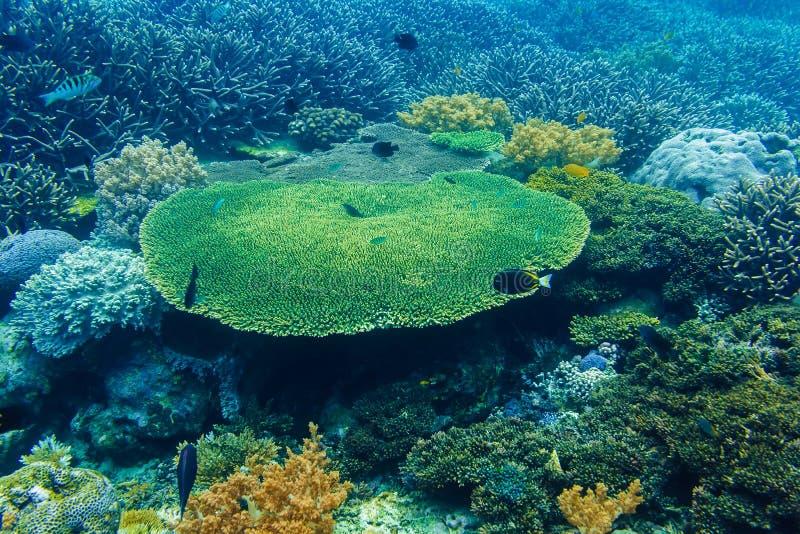 Coraux sous-marins et poissons tropicaux dans l'Océan Indien image stock