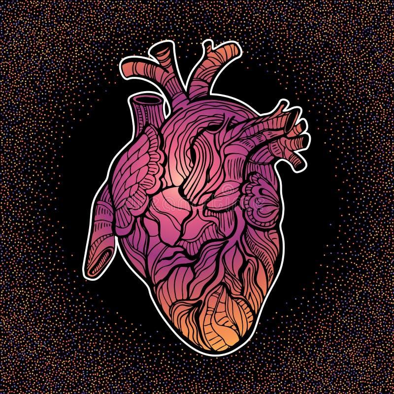 Corazón Anatómico Del Bosquejo Del Dibujo De La Mano Vector IL Del ...