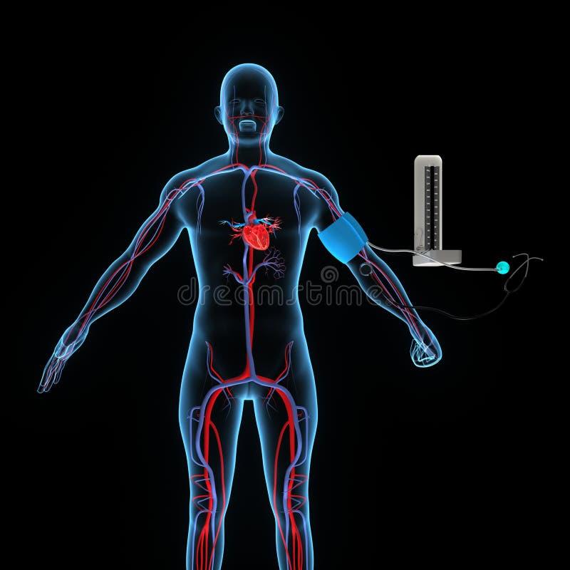 que transportan las venas y arterias