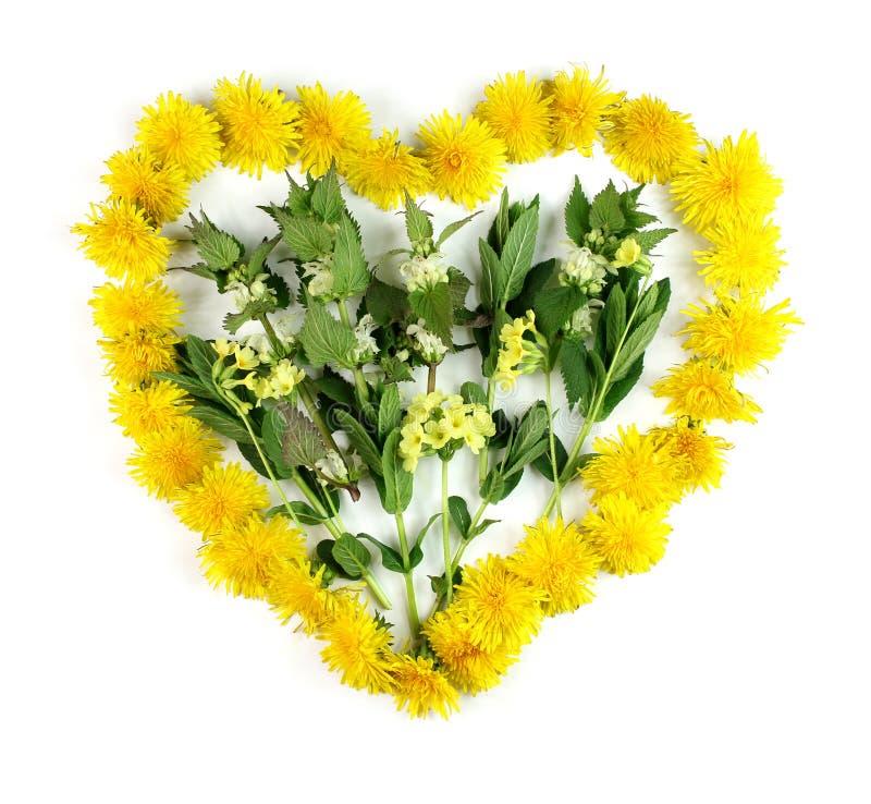 Corazón con las hierbas para la homeopatía y cocinar imagen de archivo