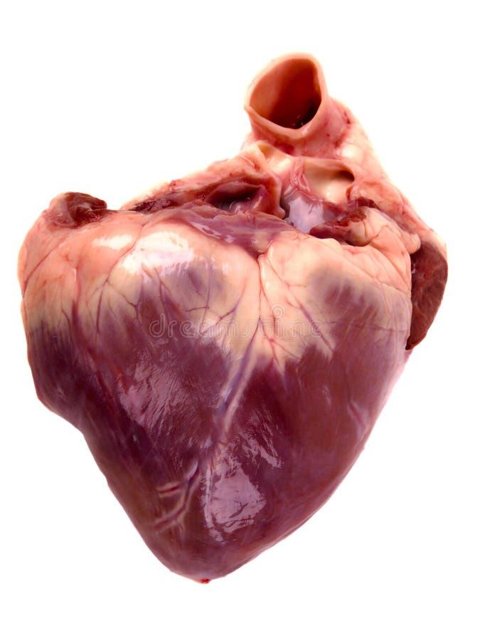 Corazón de cerdo. fotografía de archivo libre de regalías