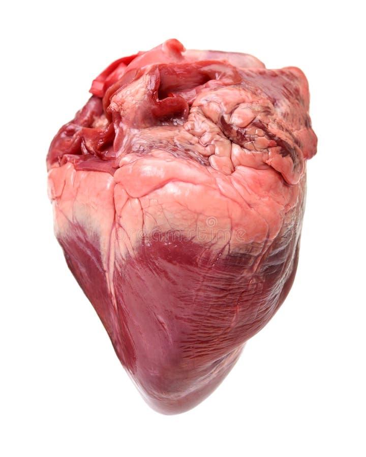 Corazón de cerdo crudo imágenes de archivo libres de regalías