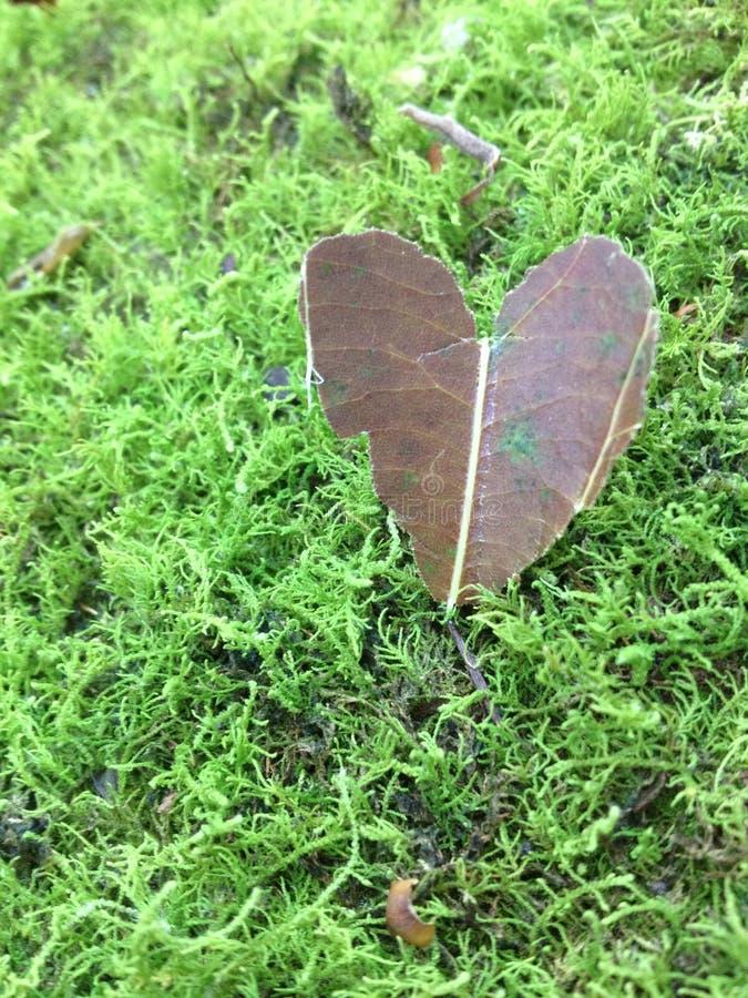 Corazón de la hoja en musgo imagen de archivo libre de regalías