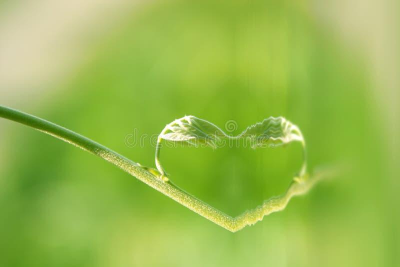 Corazón de la naturaleza fotos de archivo