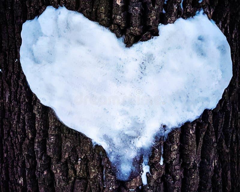 Corazón de la nieve en el tronco de árbol, árbol del invierno del amor fotos de archivo libres de regalías