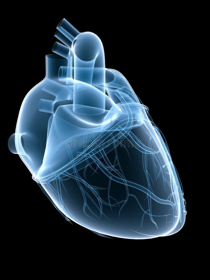 Corazón de la radiografía ilustración del vector