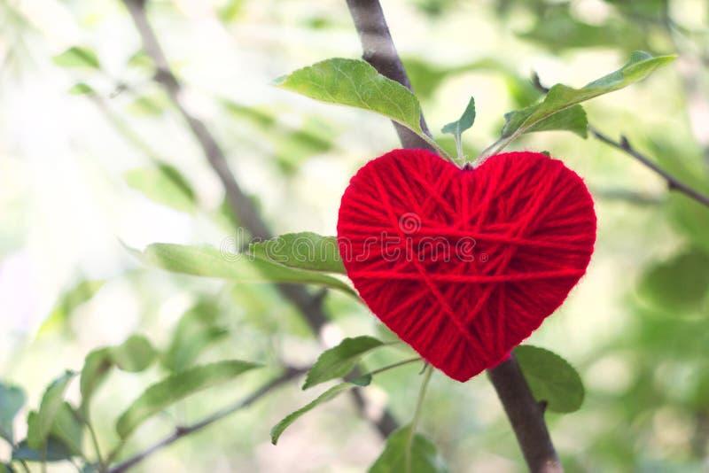 Corazón De Lana Rojo Que Crece En Un árbol En Las Luces Del Sol ...
