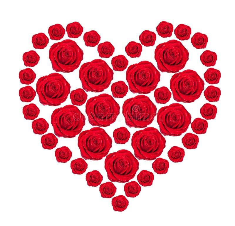 Corazón De Los Brotes Color De Rosa Del Rojo Aislados En Blanco Imágenes de archivo libres de regalías