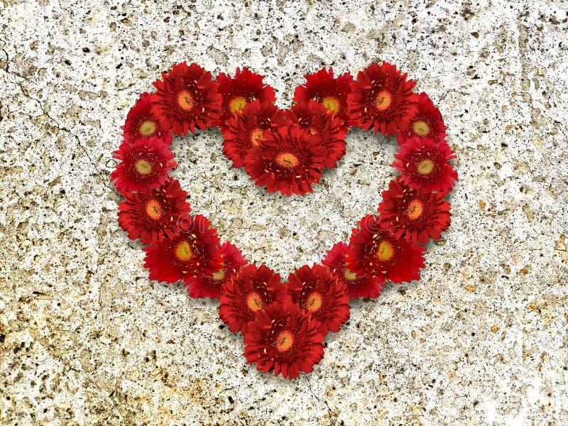 Corazón de margaritas rojas en el fondo de piedra imagen de archivo