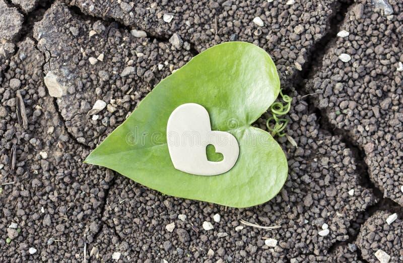 Corazón de oro en la hoja en forma de corazón en suelo seco imagenes de archivo