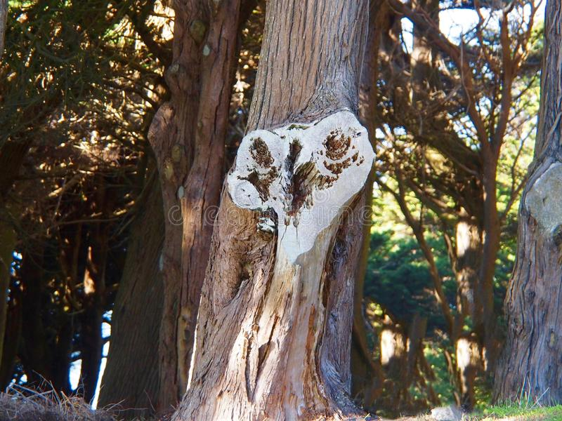 Corazón de un árbol fotografía de archivo