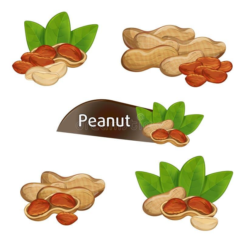 Corazón del cacahuete en cáscara de nuez con las hojas fijadas libre illustration