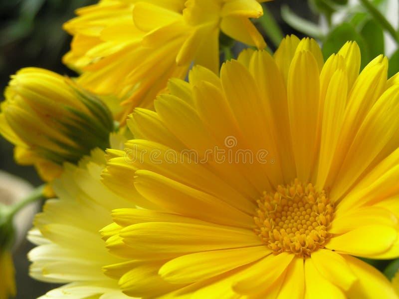 Download Corazón del sol imagen de archivo. Imagen de amarillo, extremo - 182919