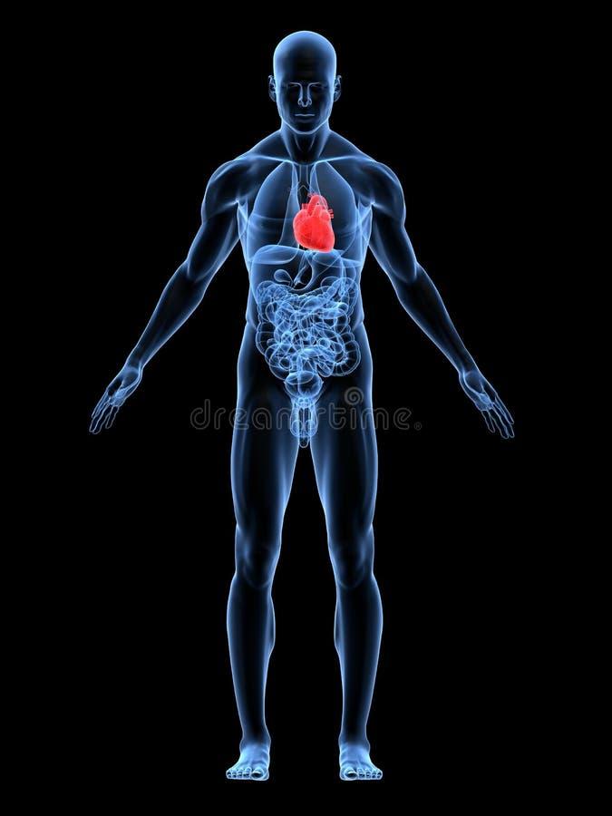 Corazón destacado ilustración del vector