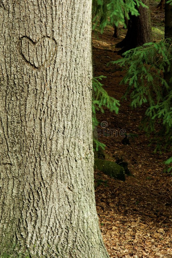 Corazón en árbol de la corteza imagen de archivo libre de regalías