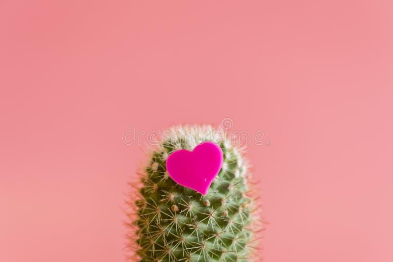 Corazón en el cactus Amor del amor del cactus del cactus En un fondo rosado imagenes de archivo