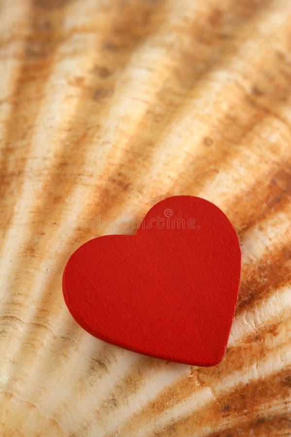 Corazón en shell imagenes de archivo