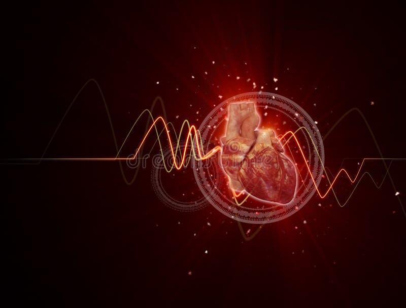 Corazón humano ilustración del vector