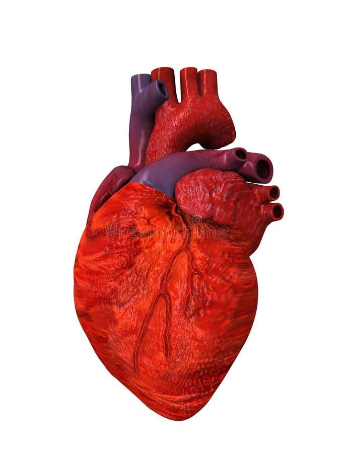Corazón Humano 3D Otros Cara Stock de ilustración - Ilustración de ...