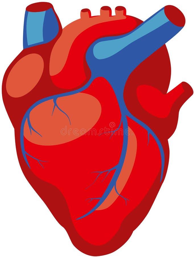 Corazón humano ilustración del vector. Ilustración de fondo - 69945780