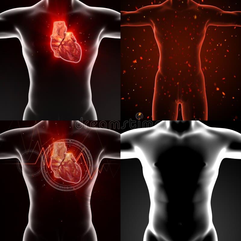 Corazón humano stock de ilustración