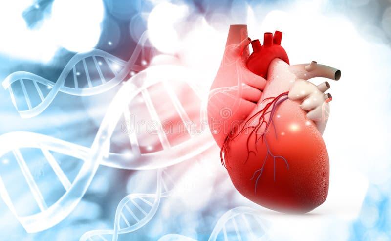 Corazón humano con el fondo de la estructura de la DNA ilustración del vector