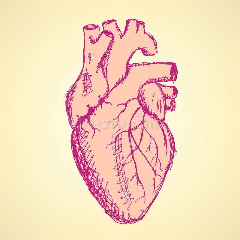 Corazón humano del bosquejo en estilo del vintage stock de ilustración
