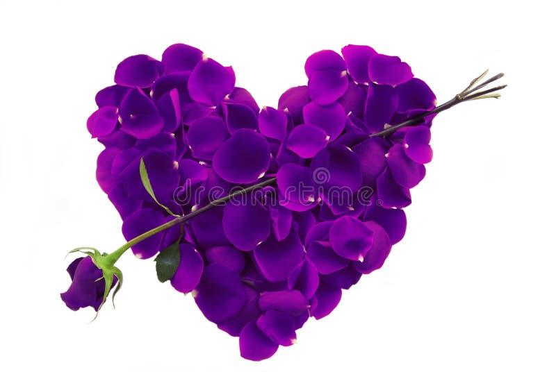 Corazón púrpura del pétalo de Rose con la flecha imagenes de archivo