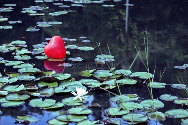 Corazón perdido en el lago, entre los lirios de agua fotografía de archivo libre de regalías