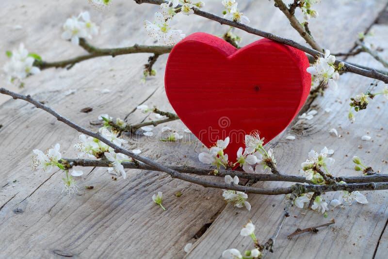 Corazón rojo con la rama de la flor, símbolo del amor para el día de tarjeta del día de San Valentín imagen de archivo libre de regalías