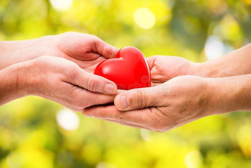 Corazón Rojo En Manos Humanas Foto de archivo - Imagen de amor ...