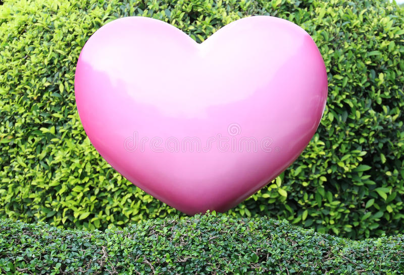Corazón rosado en el seto verde imagenes de archivo