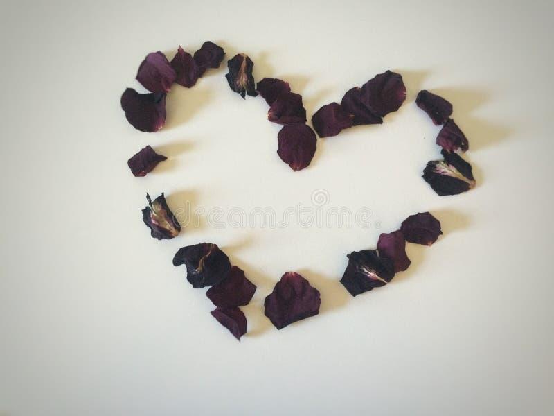 Corazón Rose fotos de archivo libres de regalías