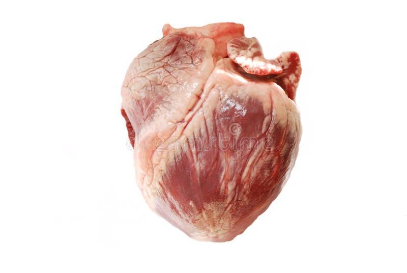 Corazón verdadero del cerdo foto de archivo