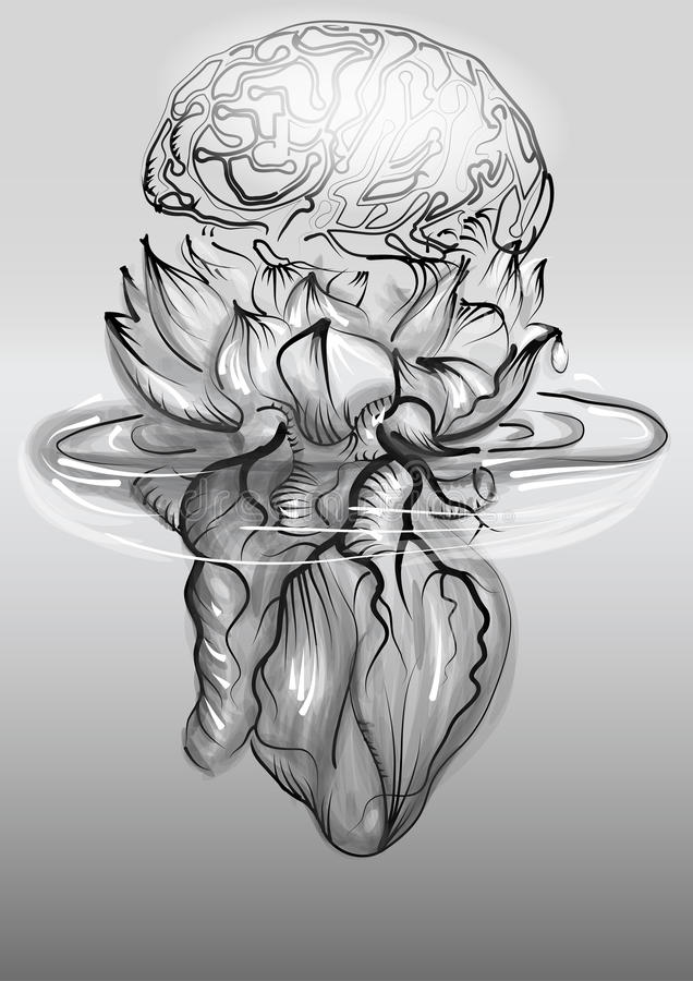 Corazón y cerebro humanos libre illustration